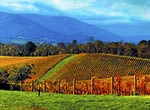 Yarra Valley Regions Crop
