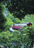 Kuranda train travelling through the dense rainfor