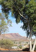Town of Alice Springs through trees