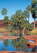 Oasis in the desert, with palm trees and rock pool