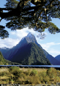 Mitre Peak framed by surrounding trees in the Fior