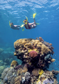Couple snorkelling near bright and colourful coral