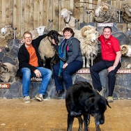 Agrodome Sheep Show