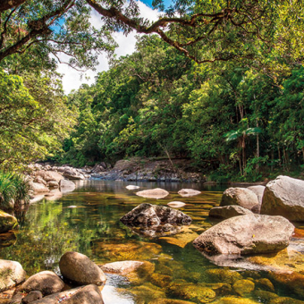 cairns daintree rainforest CC22 preview