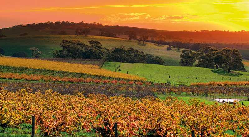 adelaide barossa valley as10 preview