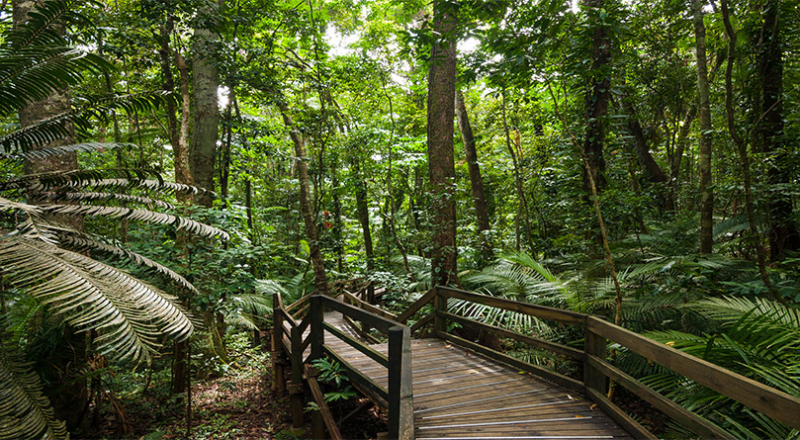 daintree rainforest boardwalk dwa preview