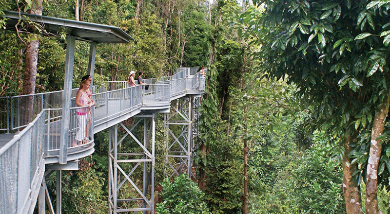 kuranda walkway kqs preview
