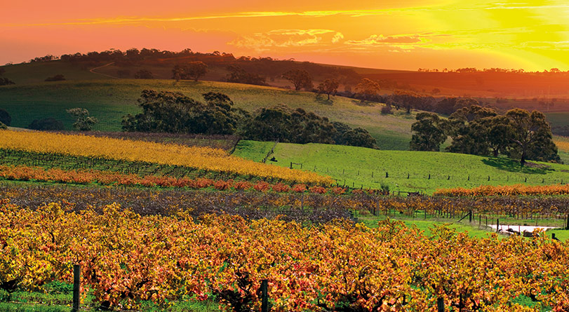 Barossa & Hahndorf Highlights