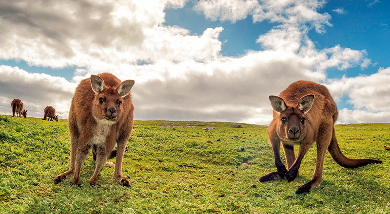 Great Ocean Road and Kangaroo Island Escape