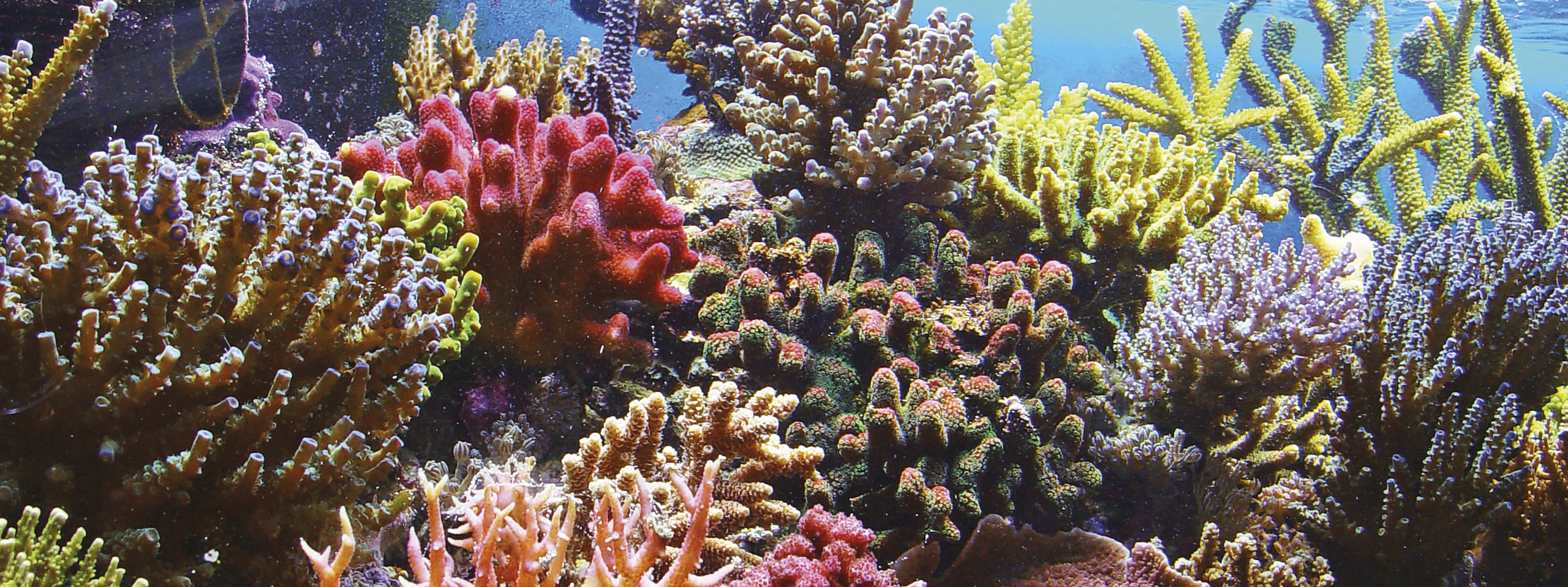 Endangered Species Of The Great Barrier Reef How You Can