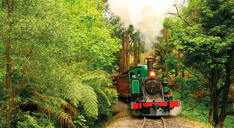 Puffing Billy Steam Train & Healesville Wildlife