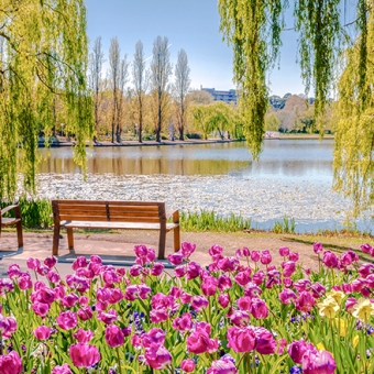 canberra park floriade preview