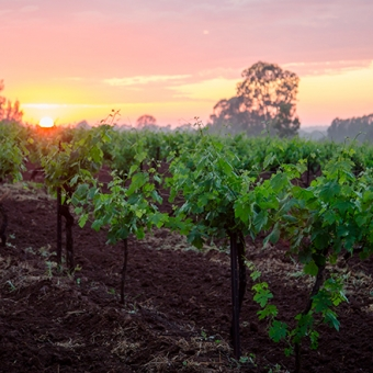 nsw hunter valley vineyards sunset preview