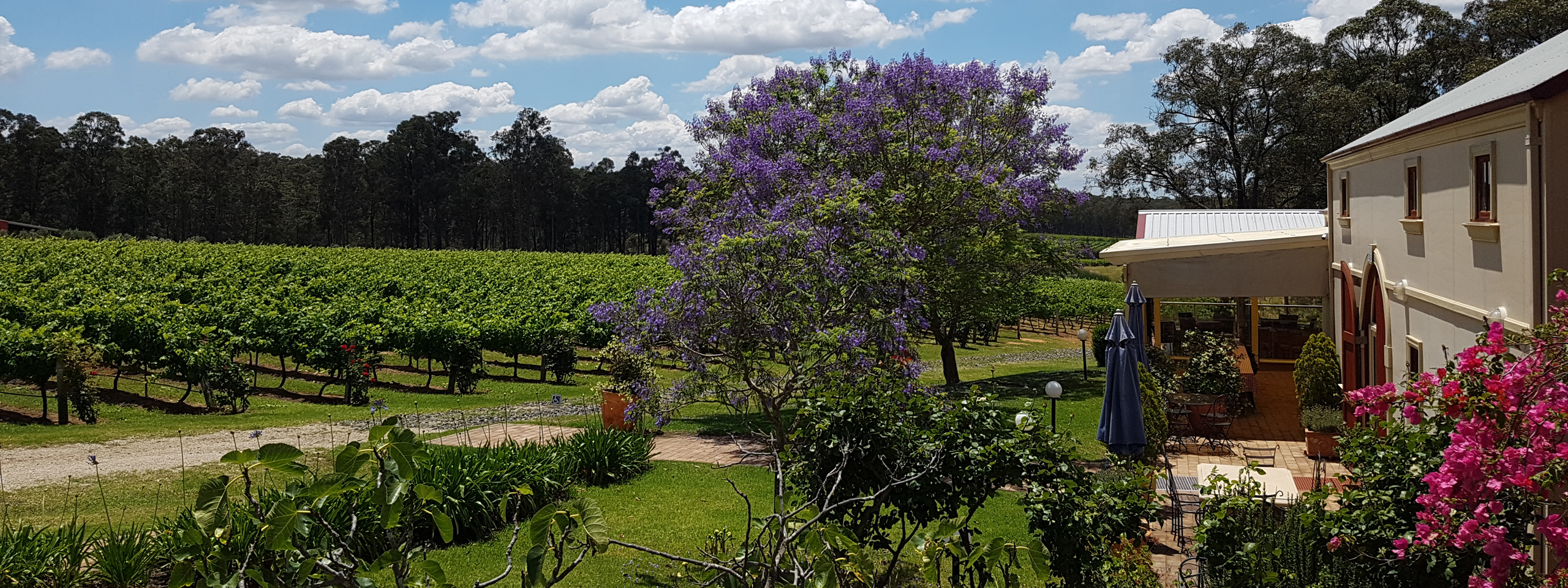 Tintilla Estate, Hunter Valley