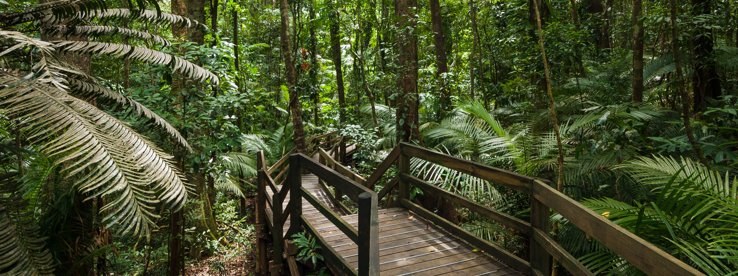 Daintree Rainforest, QLD