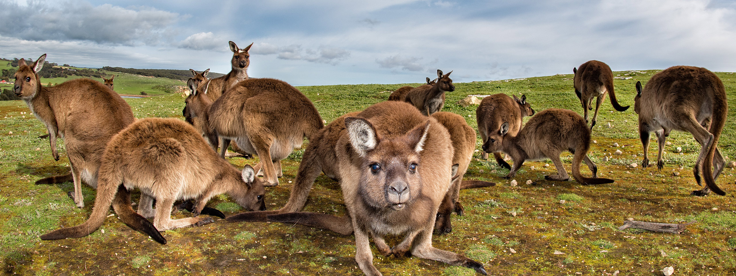 Kangaroo Island Tours Prices
