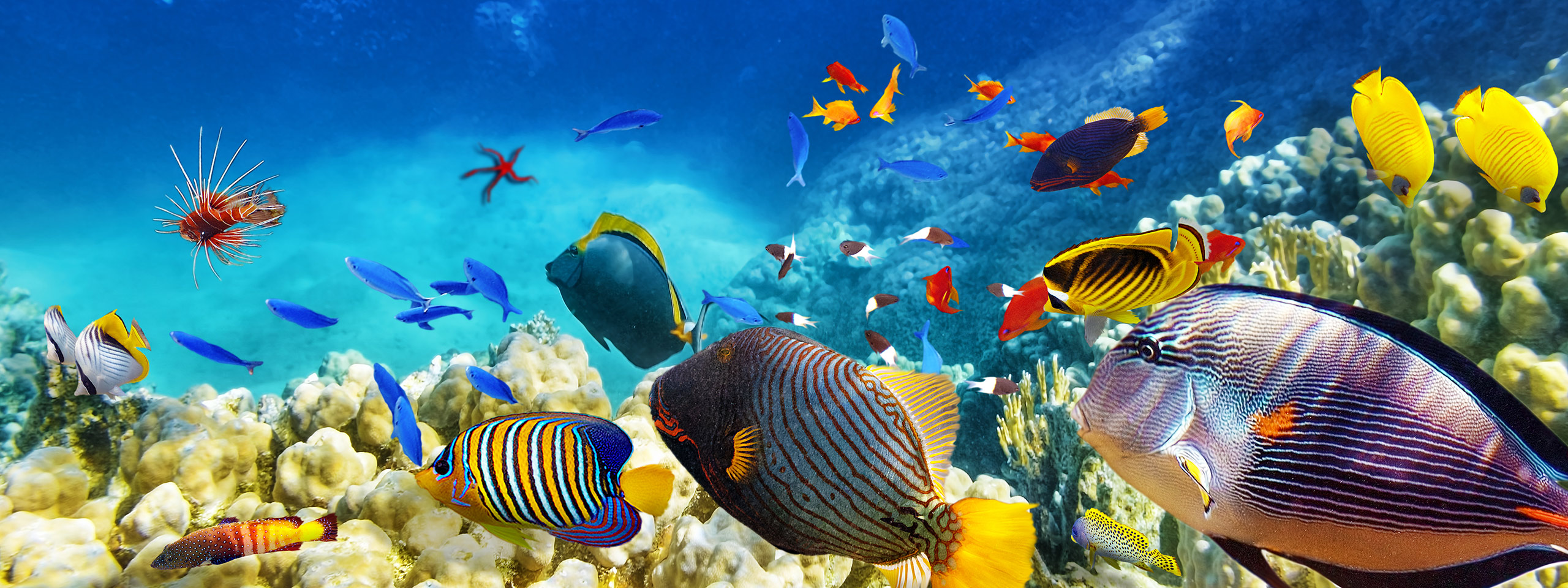 Great Barrier Reef & Queensland