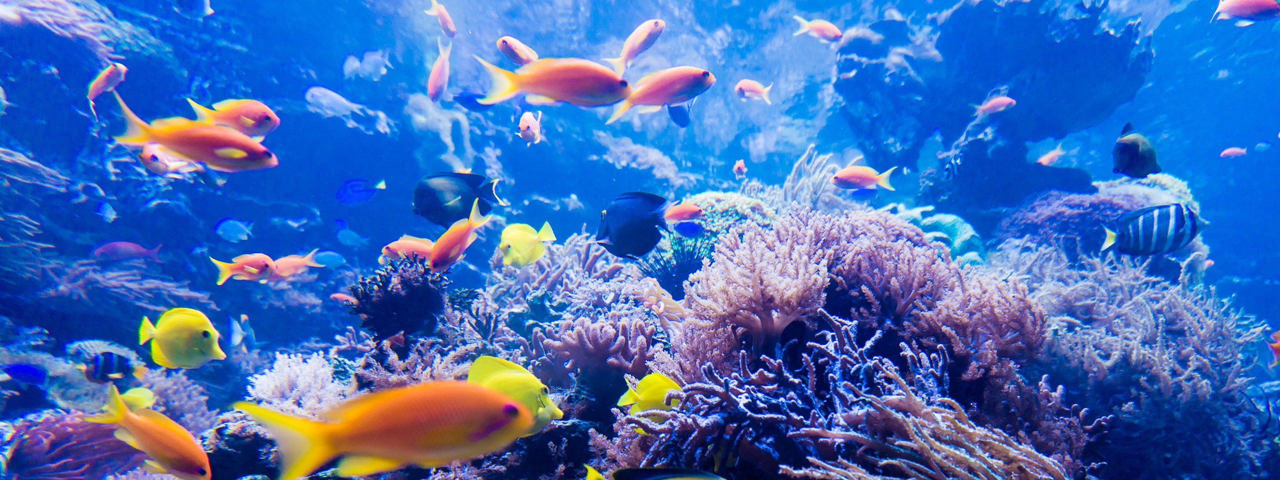 Colourful Fish and Coral, Great Barrier Reef
