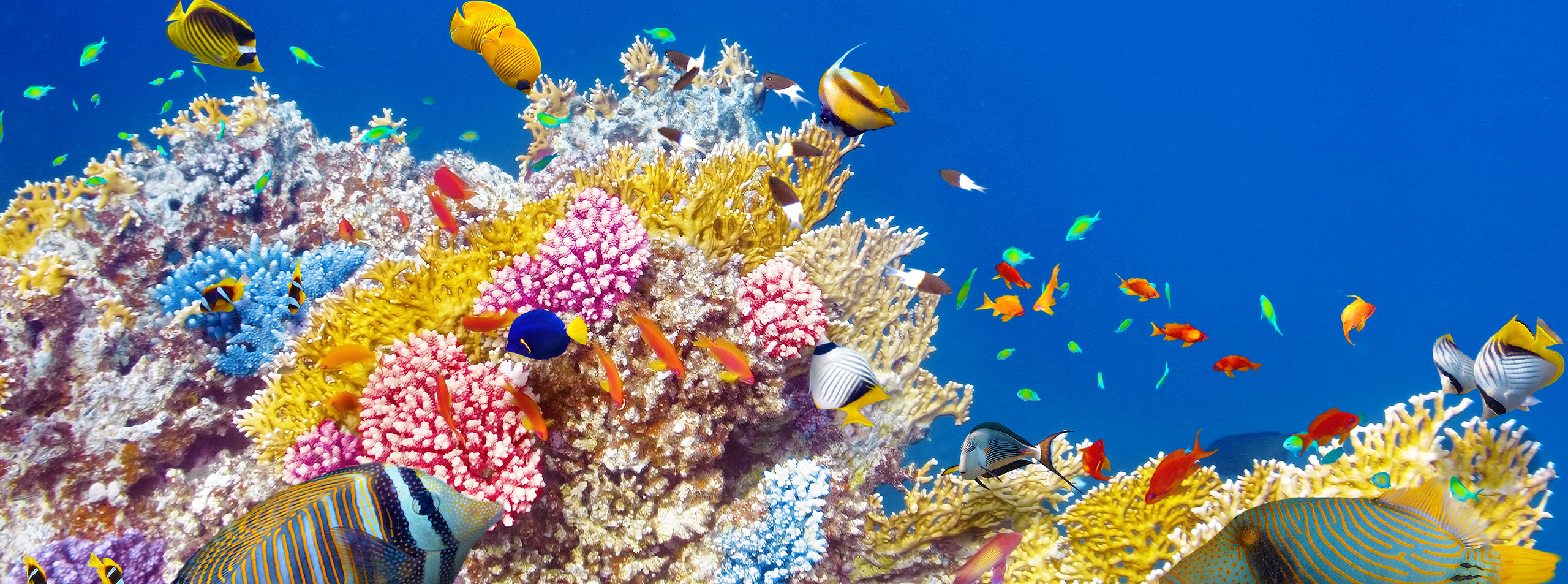 Tropical Fish and Coral, Great Barrier Reef