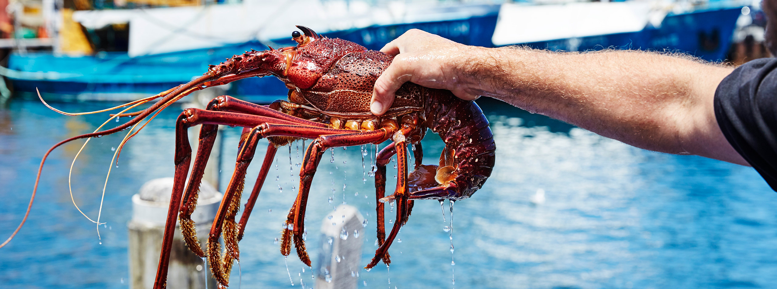 Indian Ocean Rock Lobster factory