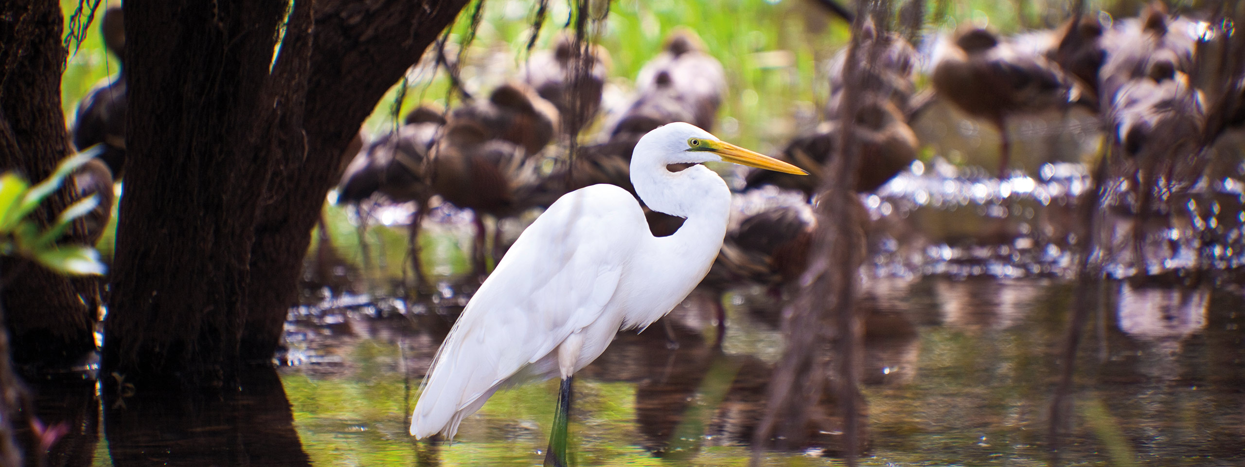 Bird spotting in Kakadu