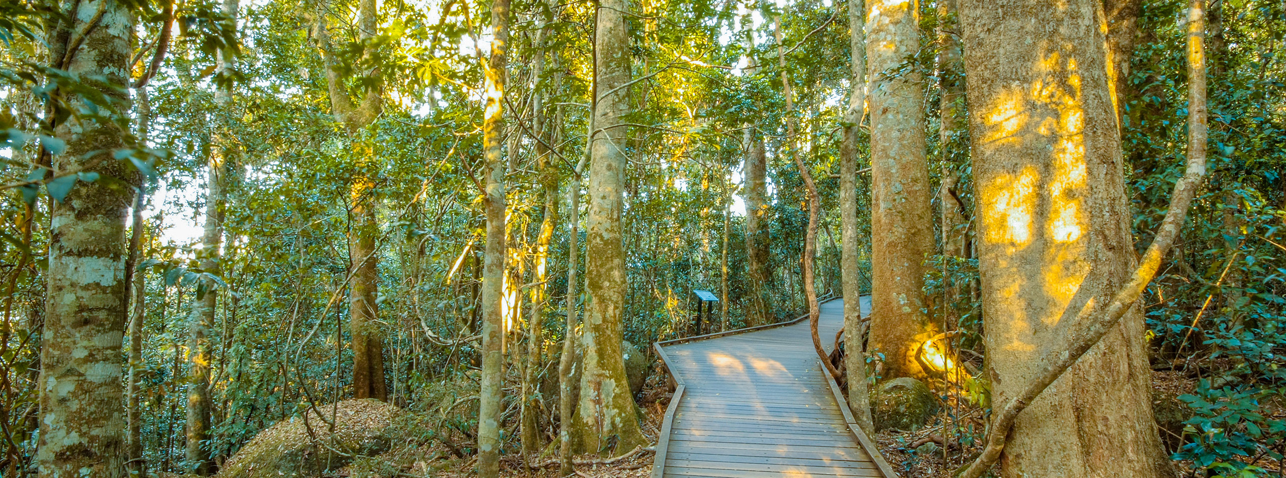 Boardwalk, Lamington National Park