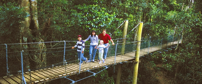 O'Reilly's Tree Top Walk