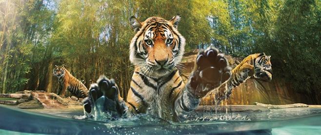 Short Break To Brisbane Amp Australia Zoo Aat Kings