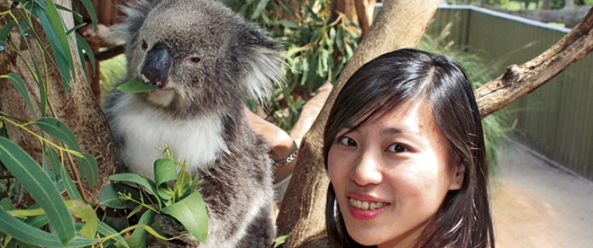 Maru Koala and Animal Park