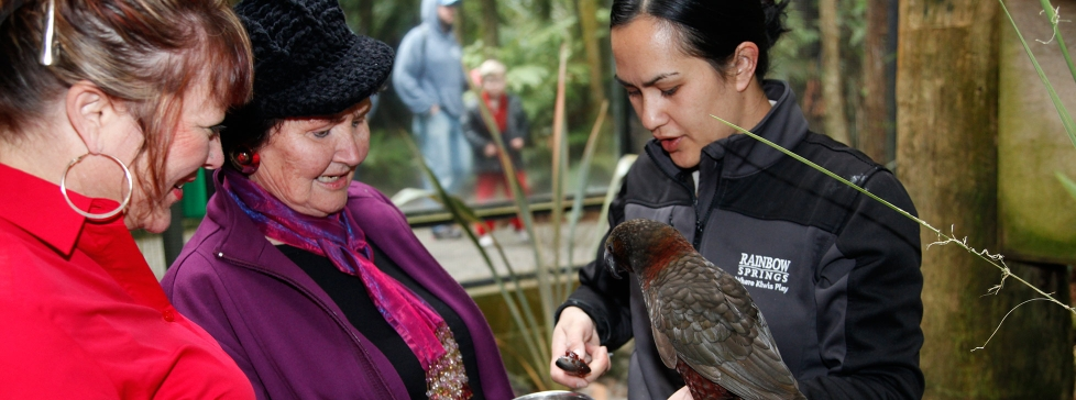 Kiwi Encounter at Rainbow Springs Nature Park (Rotorua Included Choice option)