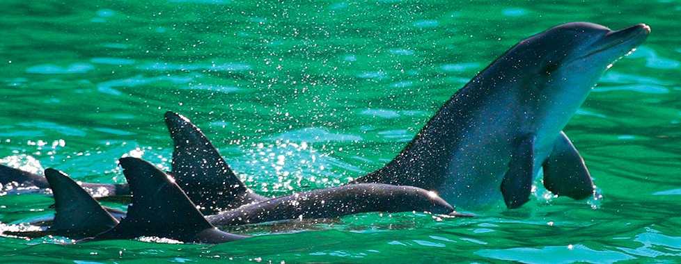Port Stephens Dolphins