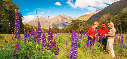 Travel Director and guests among Russell lupin wildflowers in the Mount Cook region
