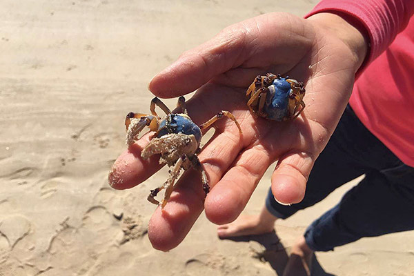 Holding crabs, crab fishing